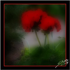 Crane's Bill - Foggy Style (littlenelly (rare but there)) Tags: leica red flower square framing coolest orton photooftheday fz50 blueribbonwinner littlenelly myexplorers 15jun2007