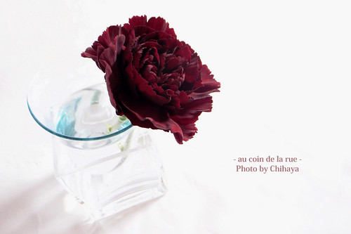 a carnation