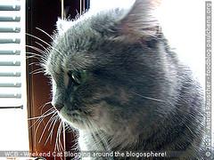 Weekend Cat Blogging