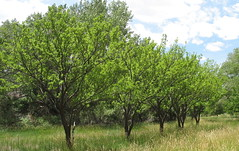 Holt Orchard (Susan Bat) Tags: ut capitolreef 2007