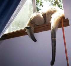 Afternoon nap in the windowsill