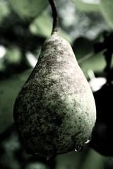 pear - by AɯǝlıAeLaMǝlɐ