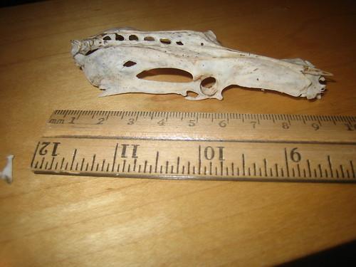 Mystery bone - side