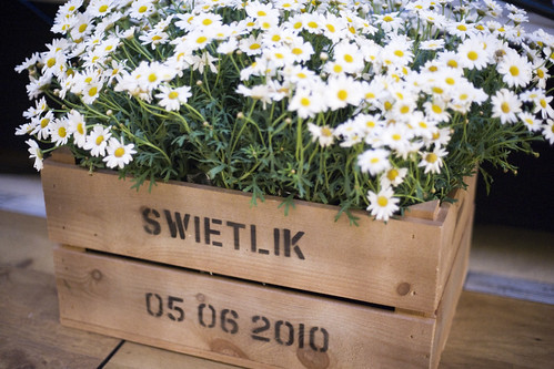Gemma & Nick Swietlik - their own box of daisies