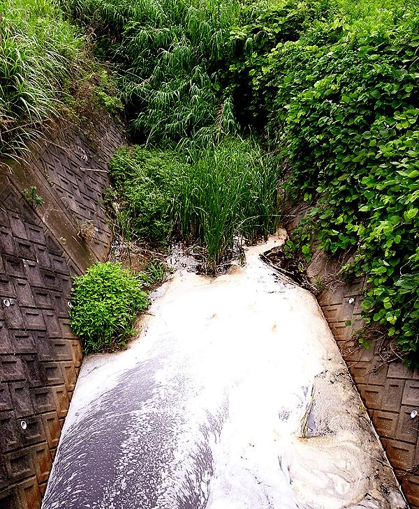 蛍のいた川