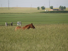 Dunny in the Rye (lostinfog) Tags: june 2007 colorado e300 horse