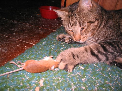 Socrates gets a mouse