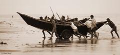 sea life..................... (Kuakata, Bangladesh)