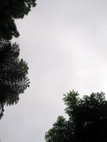 up (jacaranda)