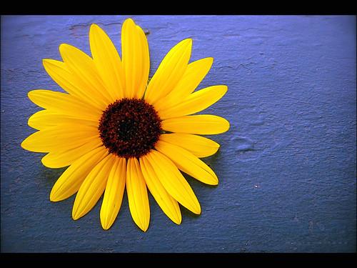 miss daisy 2