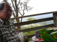Post-tea entertainment (shimmertje) Tags: wild mountain mt lorikeet parrot australia mount queensland feed kc shanlung 807 tamborine