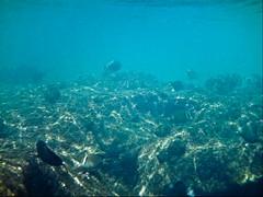 (ohhh markus) Tags: vacation sports geotagged hawaii unitedstates events places snorkeling kauai northamerica geo:lat=22221943 geo:long=159564020