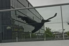 I found a bird!