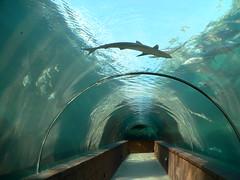 Bahamas, Nassau, Atlantis Resort