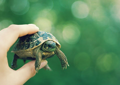 baby turtle (elise **) Tags: baby cute green canon 50mm little elise turtle explore 18 tortue 450d