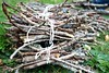 Kindling bundles... (Dawn Suzette) Tags: homeschool kindling unschool giftsfromnature newseriesoveratthemagnifyingglass