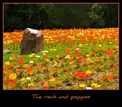 The rock and poppies (Hopeisland) Tags: flowers plant nature field japan garden spring hill poppy april colourful      4  ethnologymuseum
