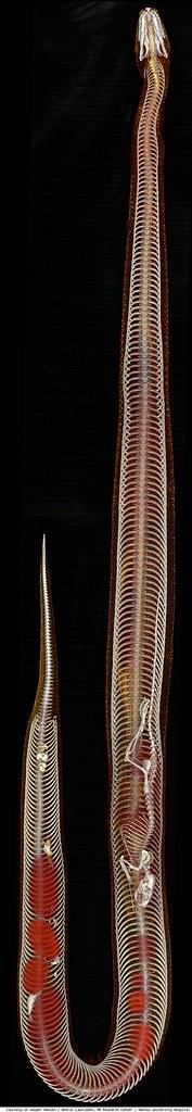 python-panoram-584-1278600808