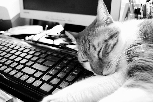 貓在鍵盤上睡著了B&W