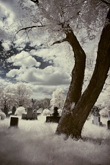 Final destination (IrenaS) Tags: blue trees white cemetery clouds montreal infrared colorinfrared abigfave