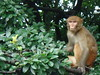 monkey (jk10976) Tags: nepal portrait people asia kathmandu monkeytemple naturesfinest swayambhunath animalkingdomelite anawesomeshot firsttheearth diamondclassphotographer jk10976 jk1976 jkjk976