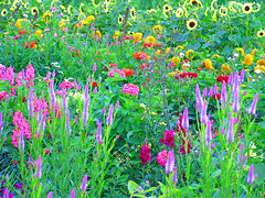 Amish Flower Bed, Surreal Version (CountryDreaming) Tags: ohio amish amishcountry flowers flowerbed flowerbeds garden gardens painterly anawesomeshot favoritegarden splendiferous outstandingshots flickrelite blueribbonwinner colorphotoaward
