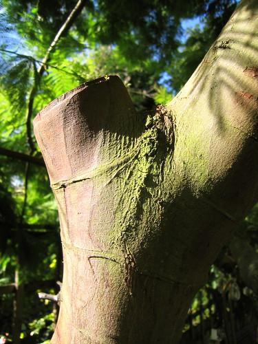 AJ's tree