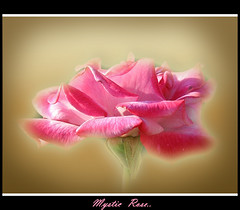 Mystic rose (Lyubov) Tags: roses macro nature beautiful rose wow ilovenature superb great excellent magical excellence supershot creativephoto thebiggestgroup abigfave ultimateshot superbmasterpiece ithinkthisisart diamondclassphotographer flickrdiamond excellentphotographerawards queenrose theperfectphotographer