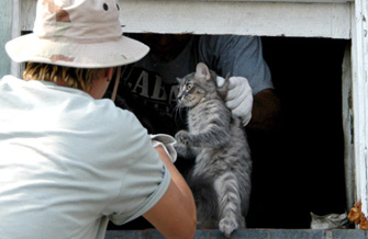 Best Friends Animal Society volunteers saving a cat in the aftermath of Hurricane Katrina in New Orleans