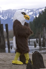 "Harrison the Fraser Valley Bald Eagle Mascot • <a style=""font-size:0.8em;"" href=""http://www.flickr.com/photos/51193137@N08/4722234764/"" target=""_blank"">View on Flickr</a>"