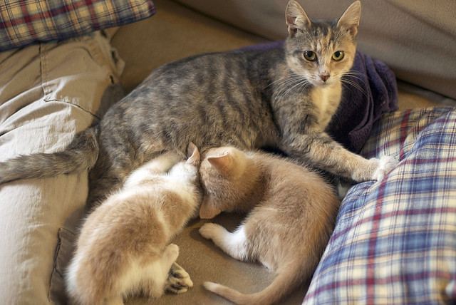 cute foster kittens and cat mama