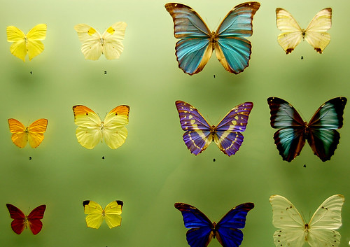 Assorted Butterflies from the Etymology Department