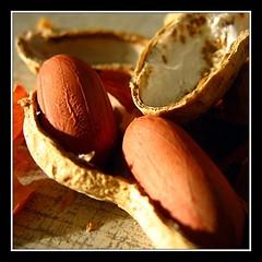 Peanuts - by NguyenDai
