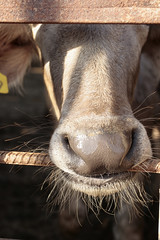 Nature in Metal (Karim-) Tags: metal barn nose grey farm egypt whiskers whisker waterbuffalo
