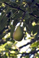 fruittree_03.jpg