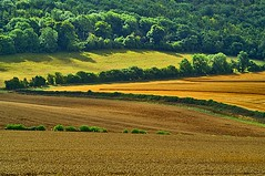 fields and forest (algo) Tags: england brown green forest photography gold topf50 bravo 500v20f quality topv1111 chilterns topv999 harvest explore fields algo topf100 soe hedges 100f naturesfinest blueribbonwinner magicdonkey 50f mywinners abigfave outstandingshot vision1000 aplusphoto ultimateshot 200750plusfaves vision100