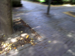 Windy summer day  8145448 (Lieven SOETE) Tags: summer tree colors experiment movingblur lievensoete