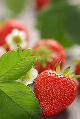 strawberries (Thorsten (TK)) Tags: red summer stilllife food plant flower macro green floral leaves closeup fruit backlight germany leaf juicy still strawberry raw berries dof sweet bokeh seasonal strawberries sunny fresh depthoffield delicious german arrangement fruity ripe arranged erdbeere erdbeeren foodphotography summery foodpresentation thorstenkraska