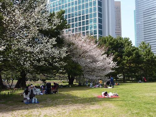 日本行-2010的櫻花-濱離宮恩賜庭園
