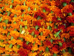 Nepal /   (les yeux heureux) Tags: travel flowers nepal orange green festival canon religious asia international rows kathmandu marigolds npal s500 garlands strung     colorphotoaward      lesyeuxheureux christophercasilli