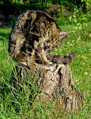 SNB10036- Le chat au travail 猫 고양이 cat 猫 (Rolye) Tags: cat garden yahoo chats google chat image jardin samsung www images com 猫 baidu ops 고양이 nv7 rolye
