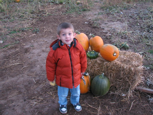 Sir O @ pumpkin patch