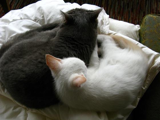 cat love 005