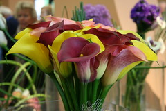 IMG_3210 (jdsa2001) Tags: flowers flores holland netherlands amsterdam gardens tulip bulbs holanda mayo jardines 2007 bulbos tulipanes keukenhoff