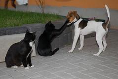 Tough Sister (schmilar77) Tags: dog pets animals cat tiere hund katze haustiere notmydog notmycat