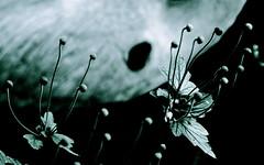 Tentacles (Supermietzi) Tags: flowers blur flower green leaves blurry pflanze grn bltter unscharf tentacles greenish unschrfe supermietzi grnlich