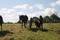 bringing the horses home (alabamawhirly) Tags: horses field pedro sallys fireandice hesper
