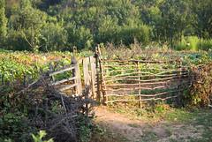 Old fence, Berisha, Kosova (bledar) Tags: field kosova crops gardh