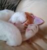 il mio micio... / my cat... (oscarbaz ☁ zɐqɹɐɔso (missing!!!! sorry!)) Tags: pet animal cat gatti micio loveofthefeline commentonmycuteness gattigattinigattoni bestofcats oscarbaz gatticaniedaltro boc1007 ~fluffy♥~♥puffy~