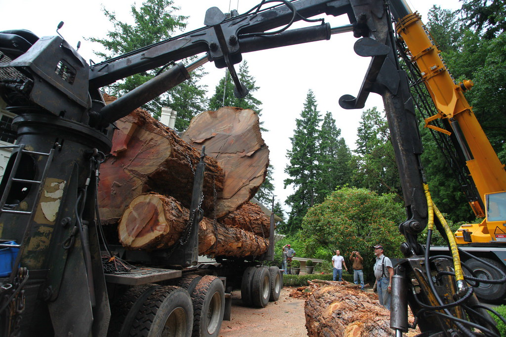 The chainsaw thread    [Archive] - Teton Gravity Research Forums